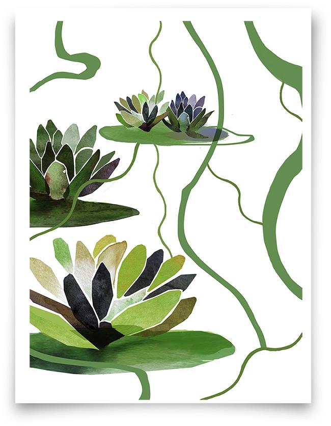swamplily
